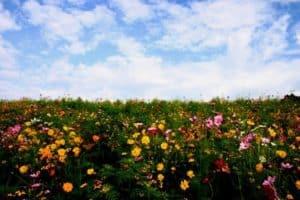 Wild flowers below a blue sky